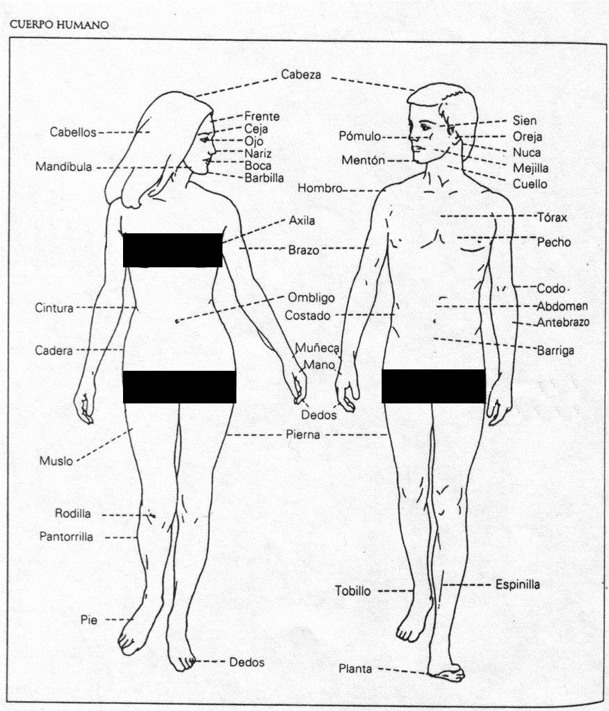 части тела на испанском языке